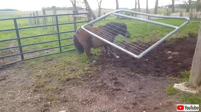 funnyhorses4_640