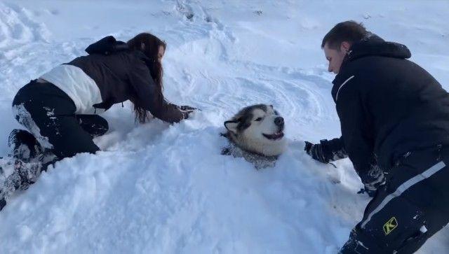 snowdog3_e