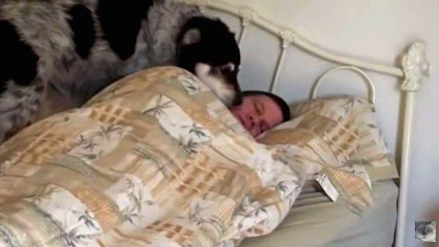 wakeupdog3