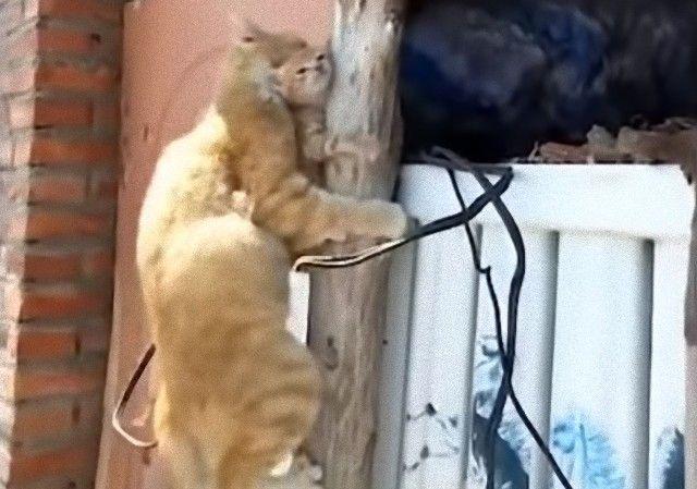 mothercats6_e