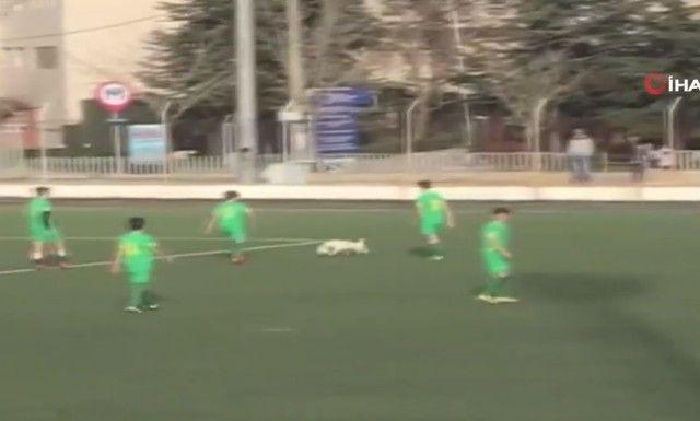 footballdog11_e
