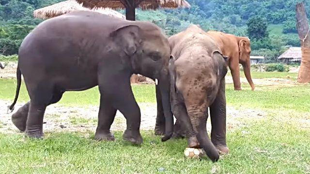 elephantplayingball1