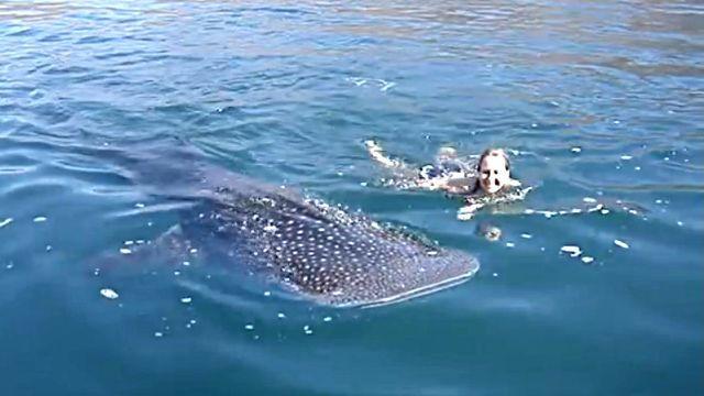 whaleshark3