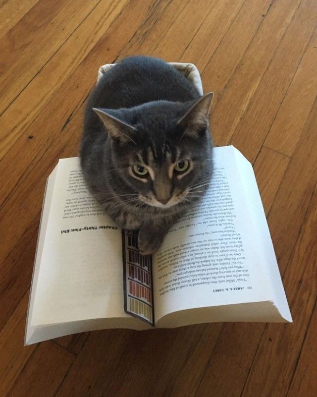 cats-vs-reading2_e