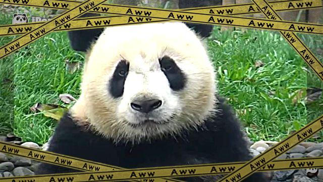pandaofuro4-frame