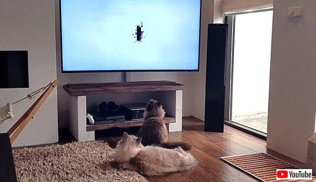 tv4cats6_640