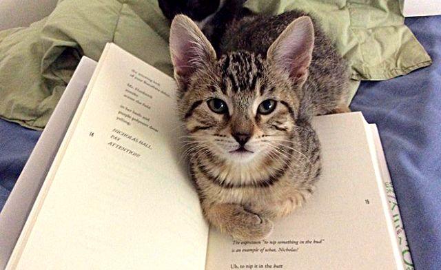 cats-vs-reading3_ea