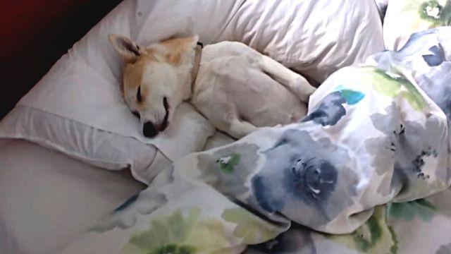 puppyplaysdead1