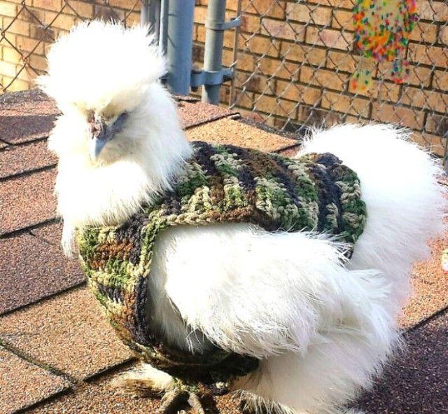chick6_e