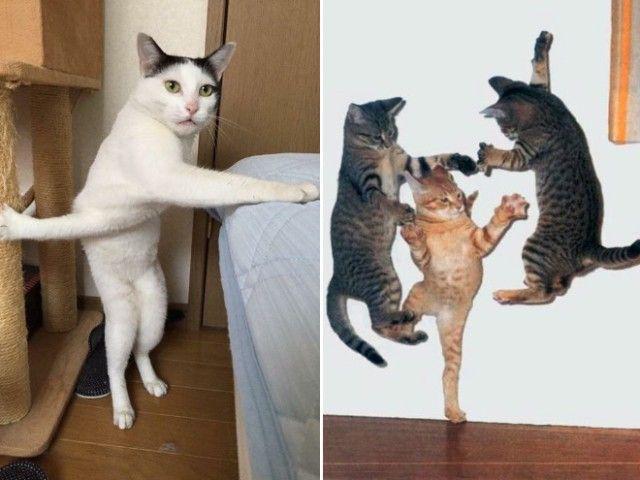 ninja-cat15_e