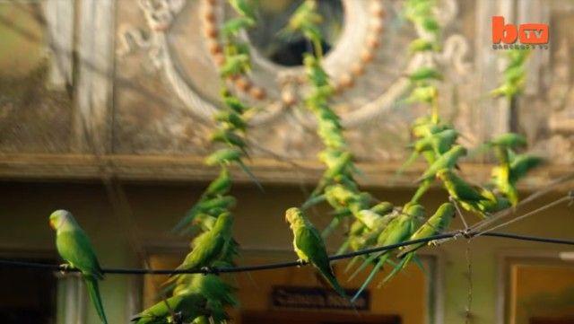 birdman5_e