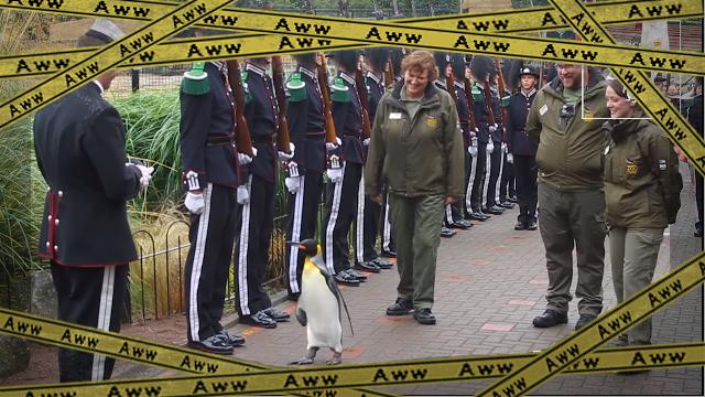 penguin [www-frame