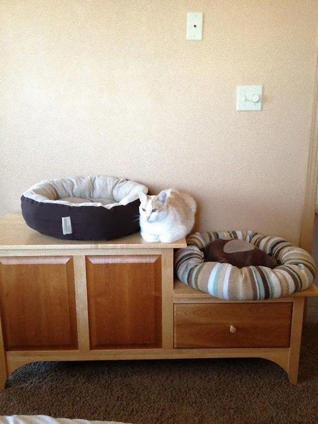 funny-idiot-cats-52-5ae9b508c0829__605_e