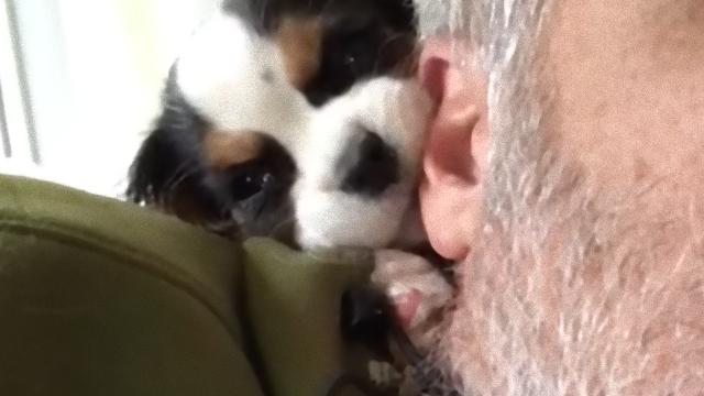 puppy-2_e
