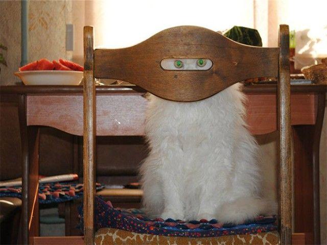 ninja-cat1_e