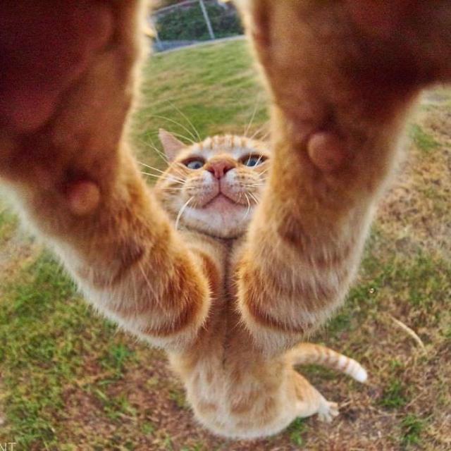 cat-4 [www.imagesplitter.net] (1)