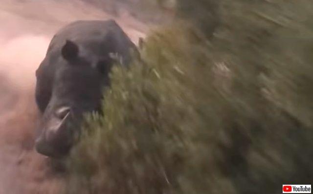 rhinocharge0_640