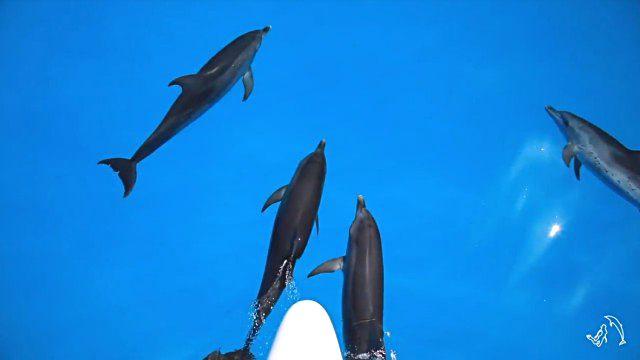 dolphininvitation2_e