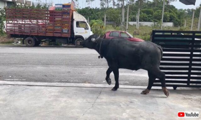 buffalotrashescar3_640