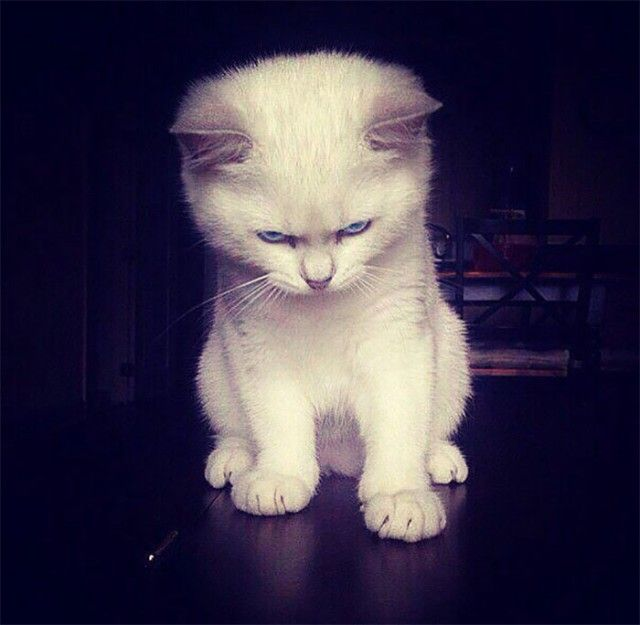 angry-kittens-7-591aef38bedce__700_e