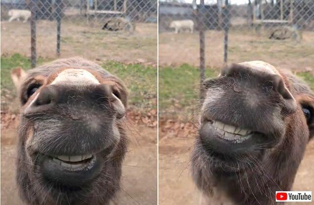 donkey5_640