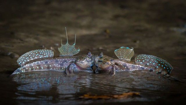 comedy-wildlife-photography-awards-finalists-2018- (11)