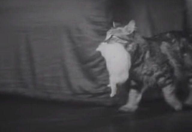 1947cats15_e