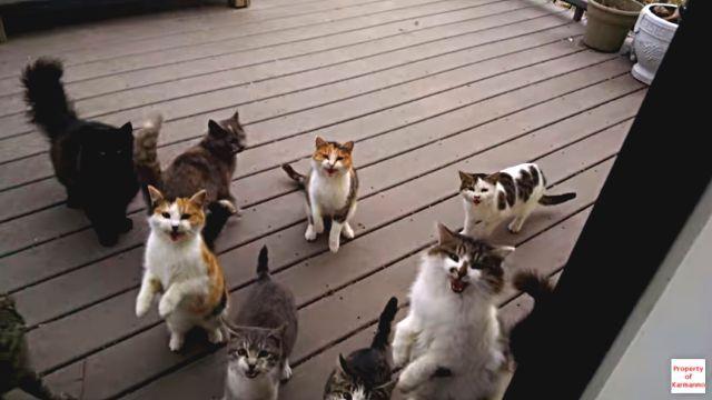 everydaycats1