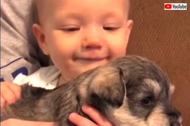 puppybringssmile0_640