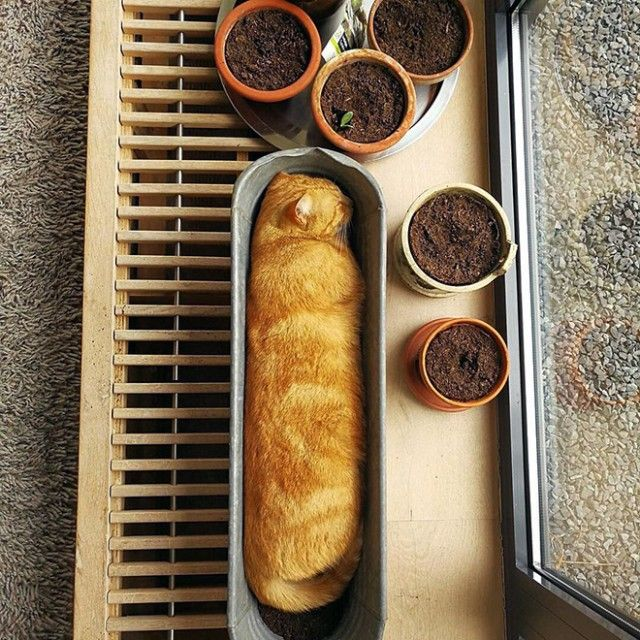cat-plant10_e