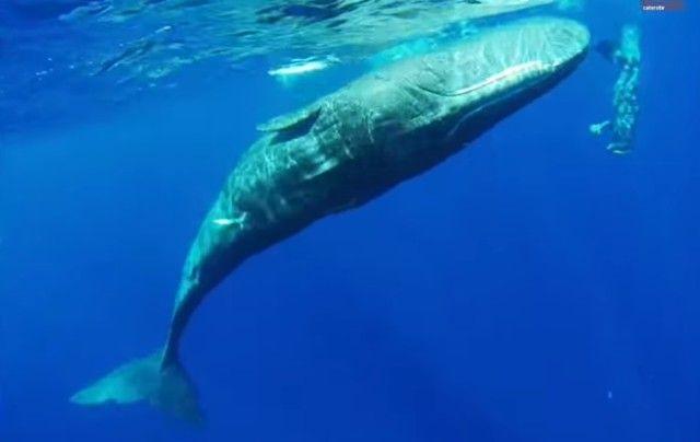 whalespins0_e