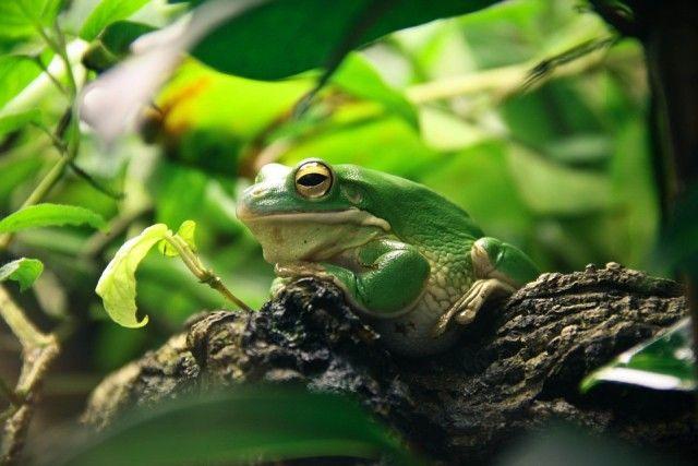 frog-663966_960_720_e