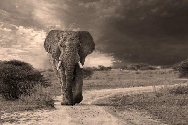 elephant6_e
