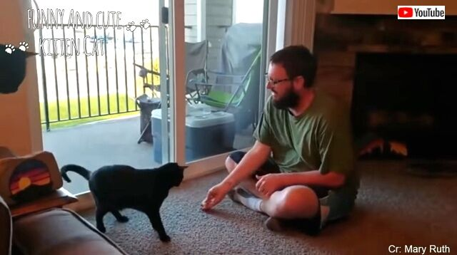 lifewithcats1_640