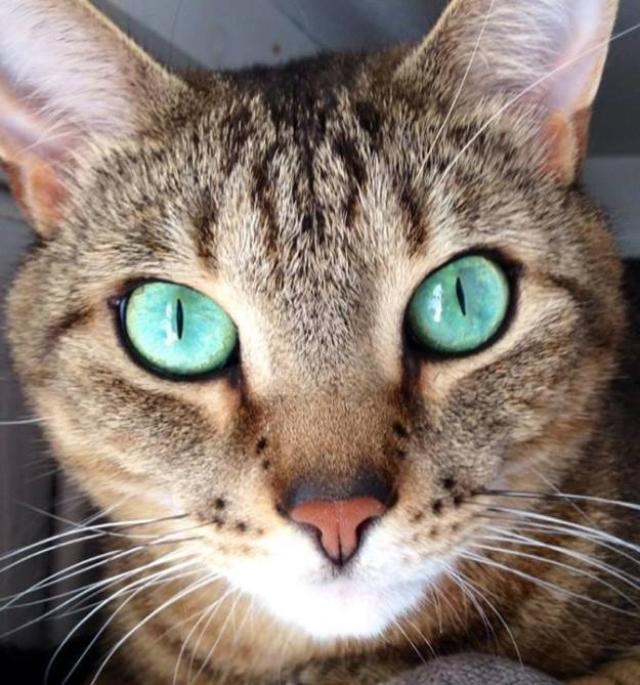 eyes-1 [www.imagesplitter.net]