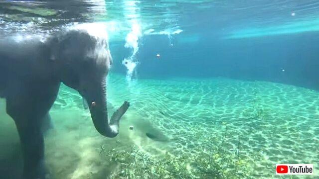 elephant2_640