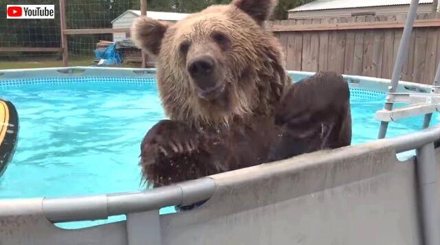 beargoes4swim3_640