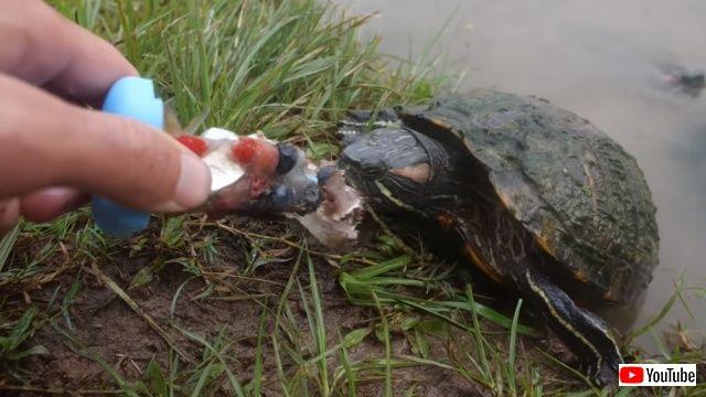 turtlesnicecandy5_640
