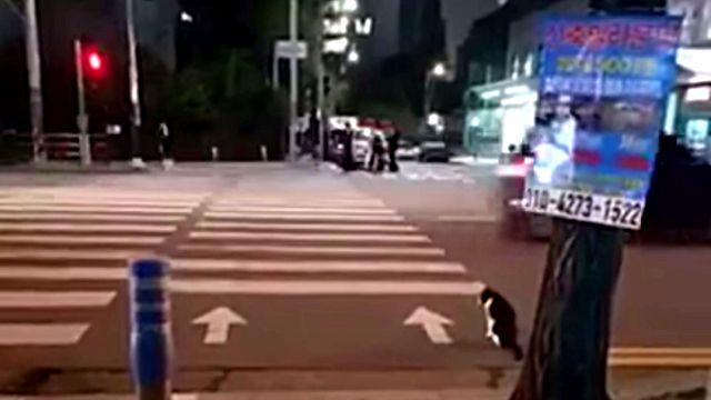 crossingcat1