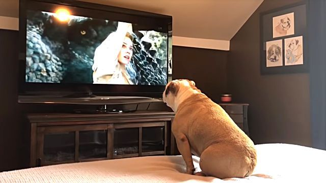 bulldogsreaction2
