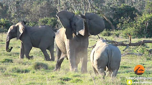elephantnrhino5