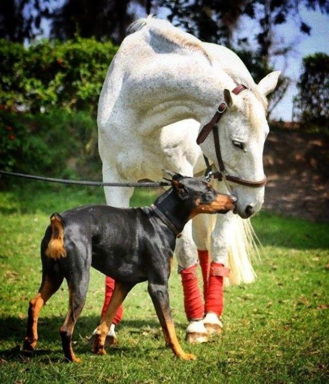 犬と馬11_e