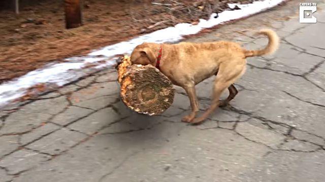 treedog4