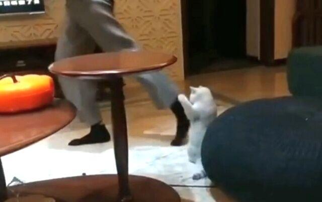 dancingcat0_640