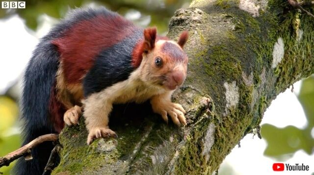 macaquesnsquirrels6_640