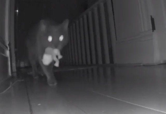 夜は猫の時間だもの。カエルのぬいぐるみを配りながら家の中をパトロールする猫