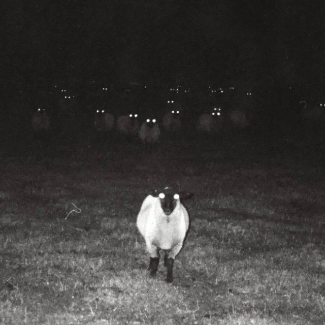 creepy-sheep6_e