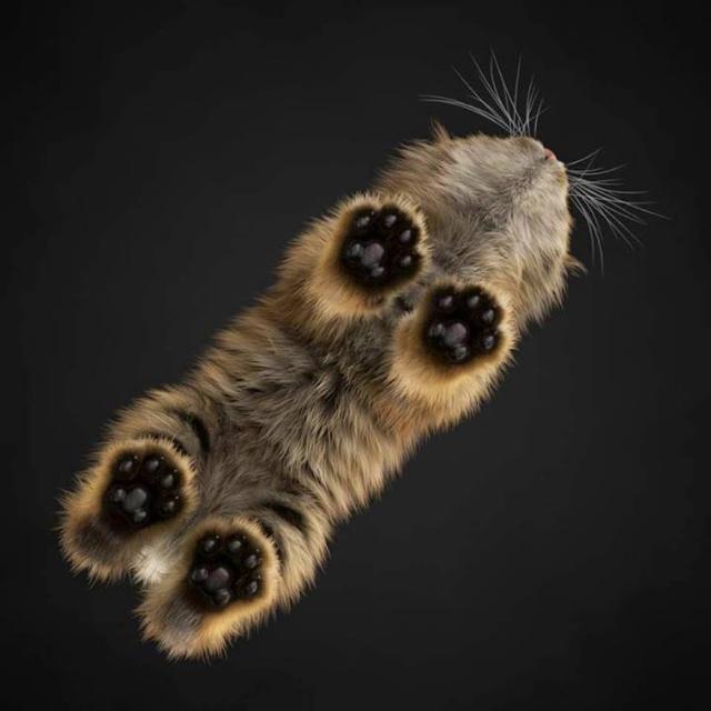 beans-7 [www.imagesplitter.net]
