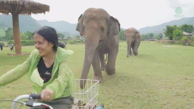 elephantsnbicycle2_e