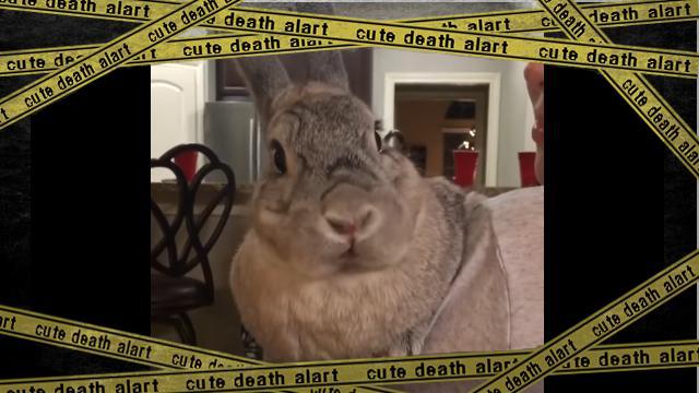 bunny-f [www-frame